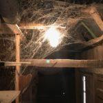 Die Spinnenweben gehören zum Haus.