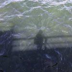 Susannes_Schatten_auf_dem_Foerdewasser