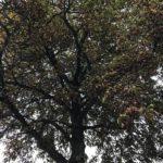 Mehr Herbstindizien