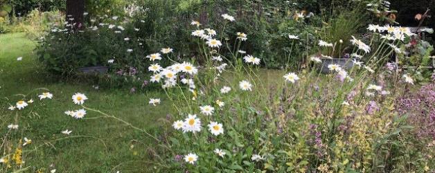 Sommergartenliebe oder ein üppiger Schreibsommer
