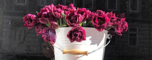 Tulpengeschichtensehnsucht oder irgendwann schreibe ich einen Tulpenkrimi