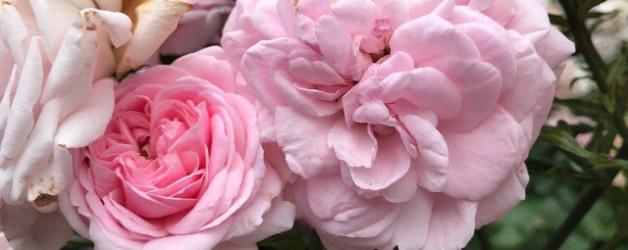 Yoga vorm Schreiben flauscht mich rosa oder Schreibtag 3